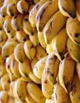 Bananen La Gomera Spezialität