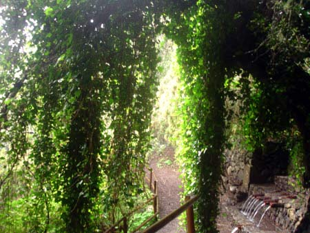 Efeu Wanderweg, Garajonay Nationalpark Gomera
