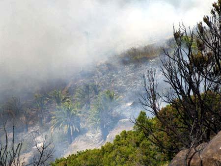 Feuer auf La Gomera