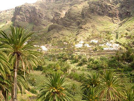 Das Tal mit den majestätischen Palmen