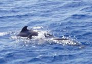 Bootsausflug von Vueltas aus: Delfine und Wale beobachten