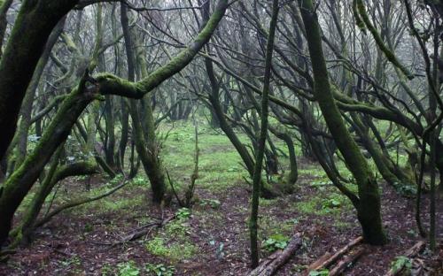 Subtropischer Wald, La Gomera